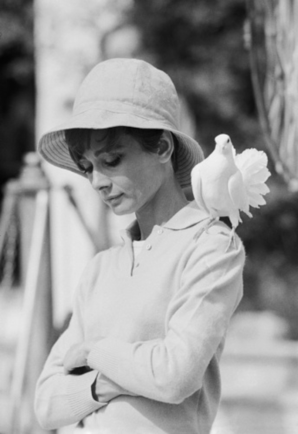 Terry O'Neill: Audrey Hepburn with dove St. Tropez, 1967 Gelatin silver print Signed on verso & on recto Numbered on verso 60,7 x 50,2 cm Ed. 25/50