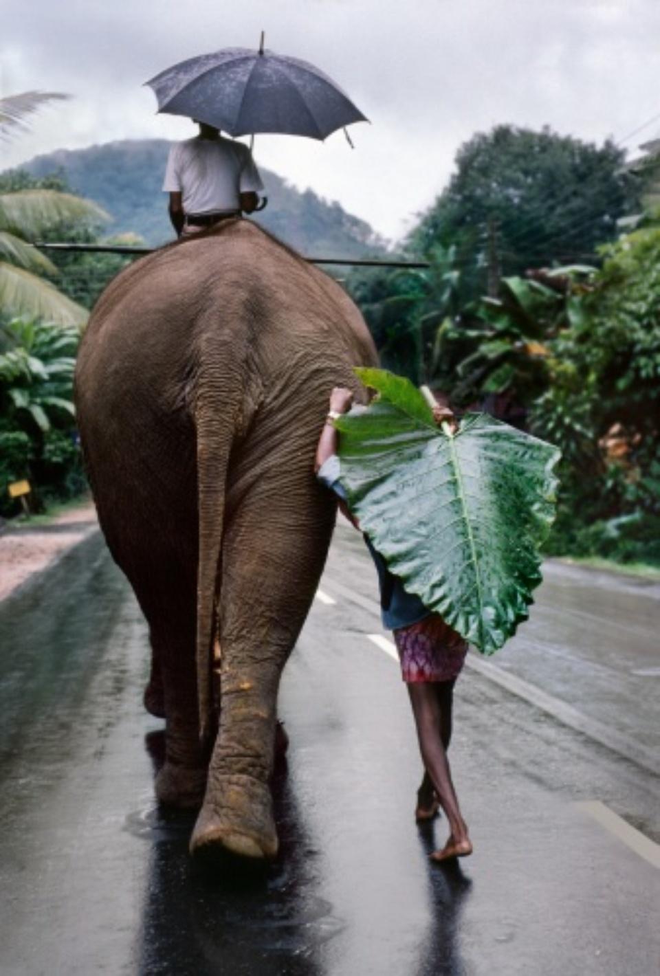 Young man walks behind Elephant Sri Lanka, 1995
