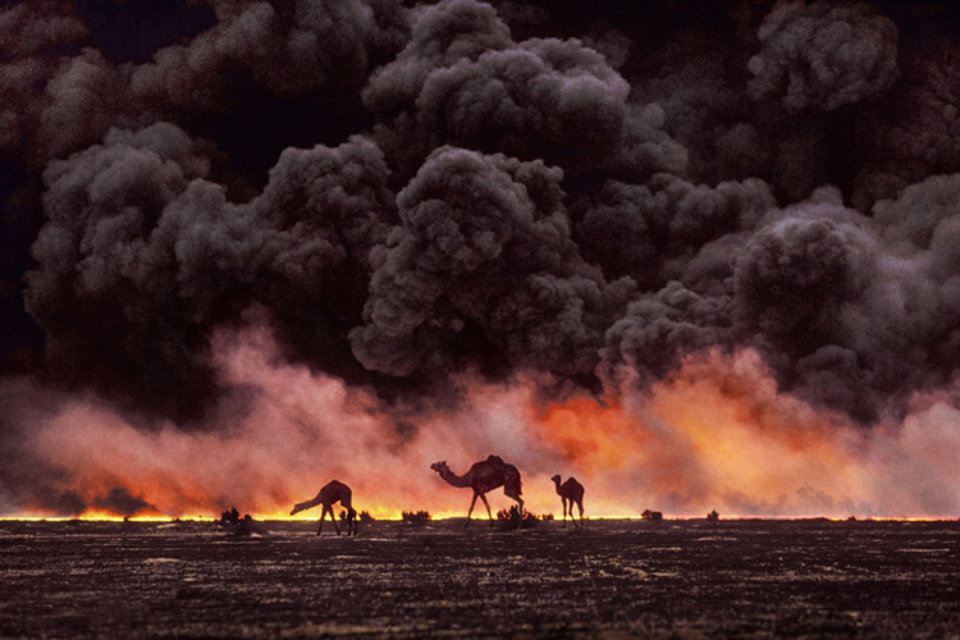 Steve McCurry: Camel and Oil Fields Kuwait, 1991 Signed, titled, dated and numbered on verso C-print 50 x 60 cm // 76 x 101 cm // 101 x 152 cm Editioned