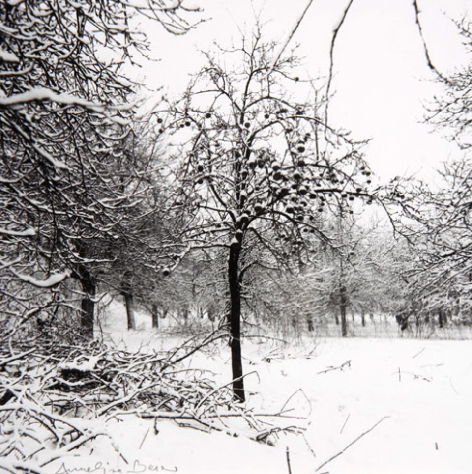 Annelise Beier Apfelbaum im Winter 1985 Gelatin Silver Print
