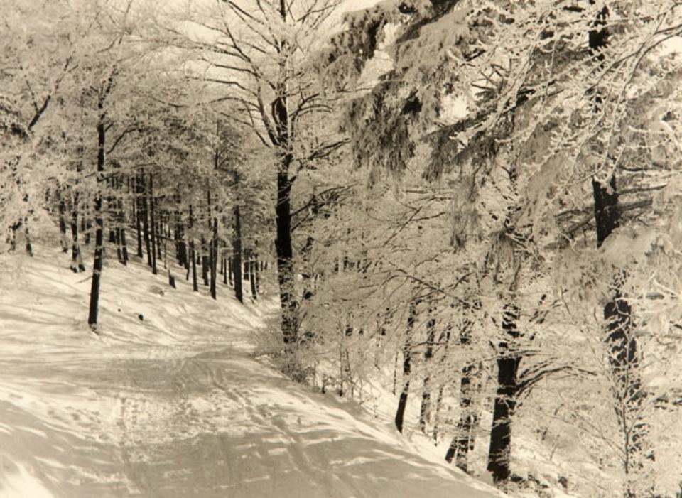 Unknown Winterweg in Norddeutschland 1941 Gelatin Silver Print