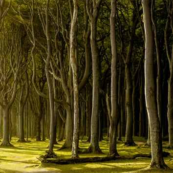 """""""WOODLANDS AND BEYOND"""""""