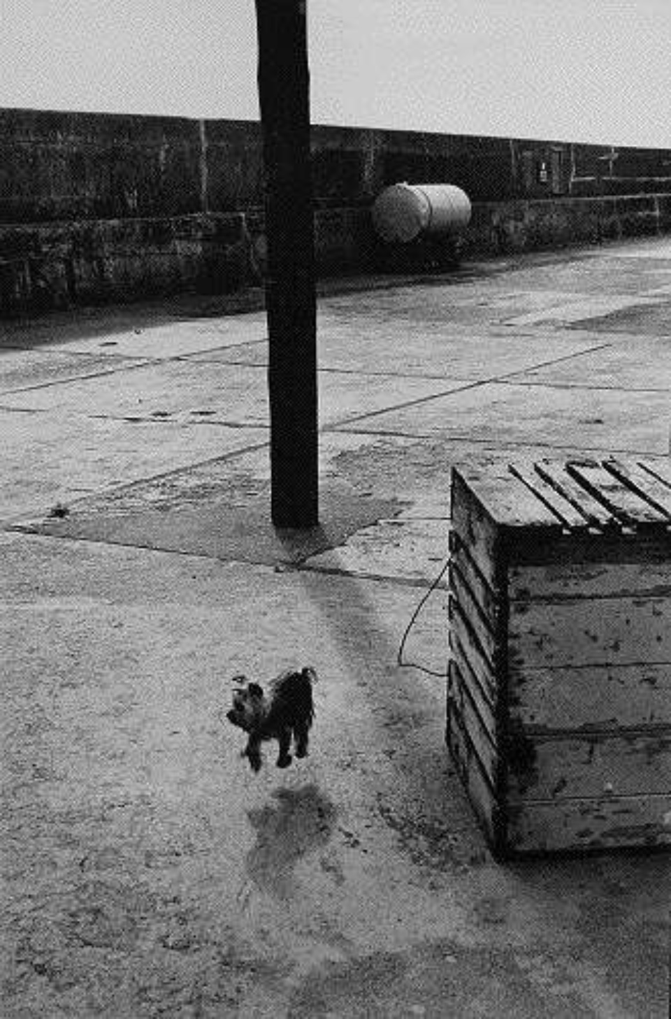 Elliott Erwitt Ballycotton Ireland, 1968 Gelatin Silver Print Signed, titled and dated on verso