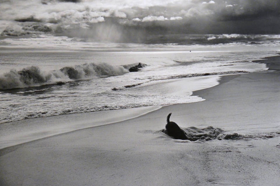 Elliott Erwitt: East Hampton New York, 1998 Gelatin Silver Print Signed, titled and dated on verso Available in different formats