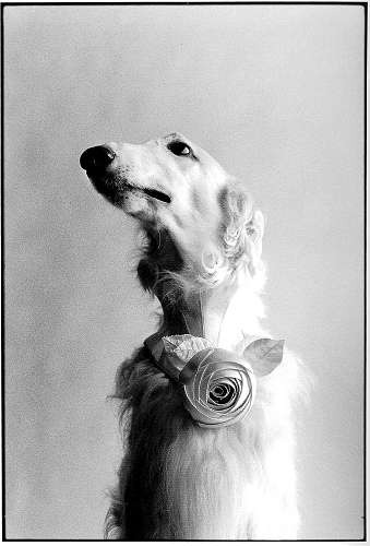 Elliott Erwitt New York City New York, 1999 Gelatin Silver Print Signed, titled and dated on verso Available in different formats