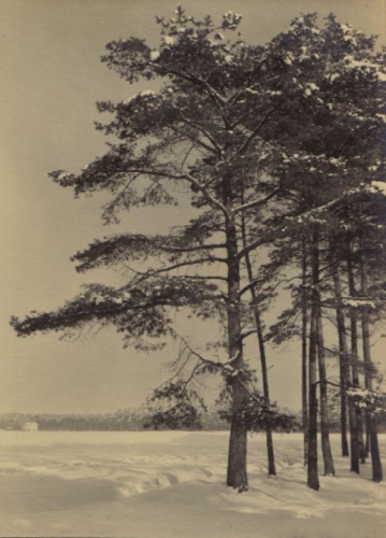 Franz Münster Untitled (Bäume im Schnee) 1929 Vintage silver bromide print Dated on verso 23 x 16,5