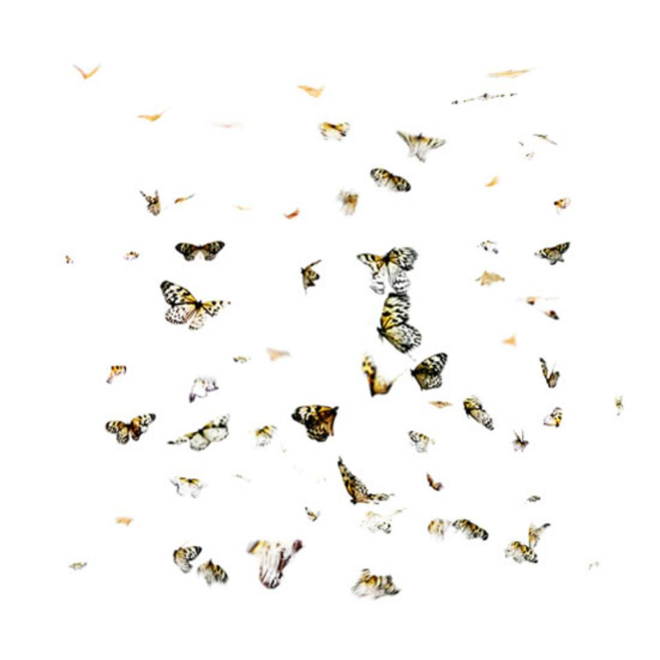Georg Küttinger: Schmetterlinge IV 2010 Diasec Print 70 x 70 cm Ed. 1/5
