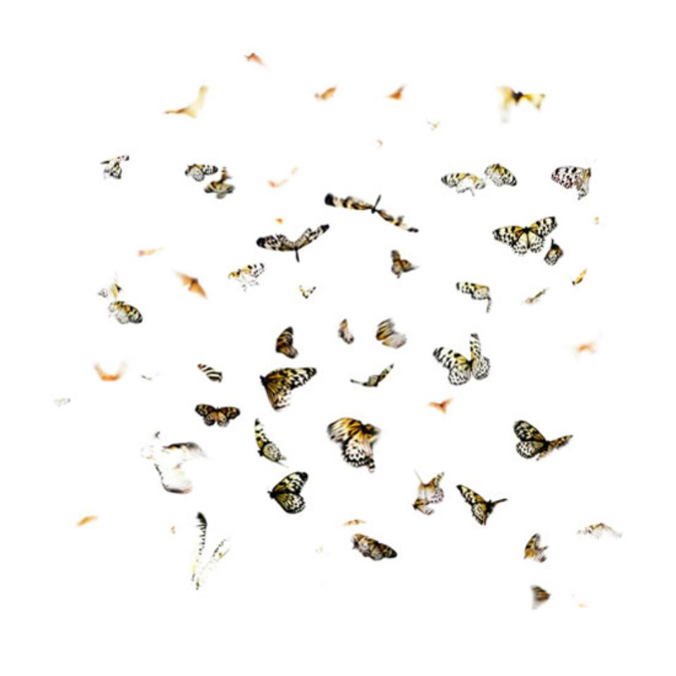 Georg Küttinger: Schmetterlinge V 2010 Diasec Print 70 x 70 cm Ed. 1/5