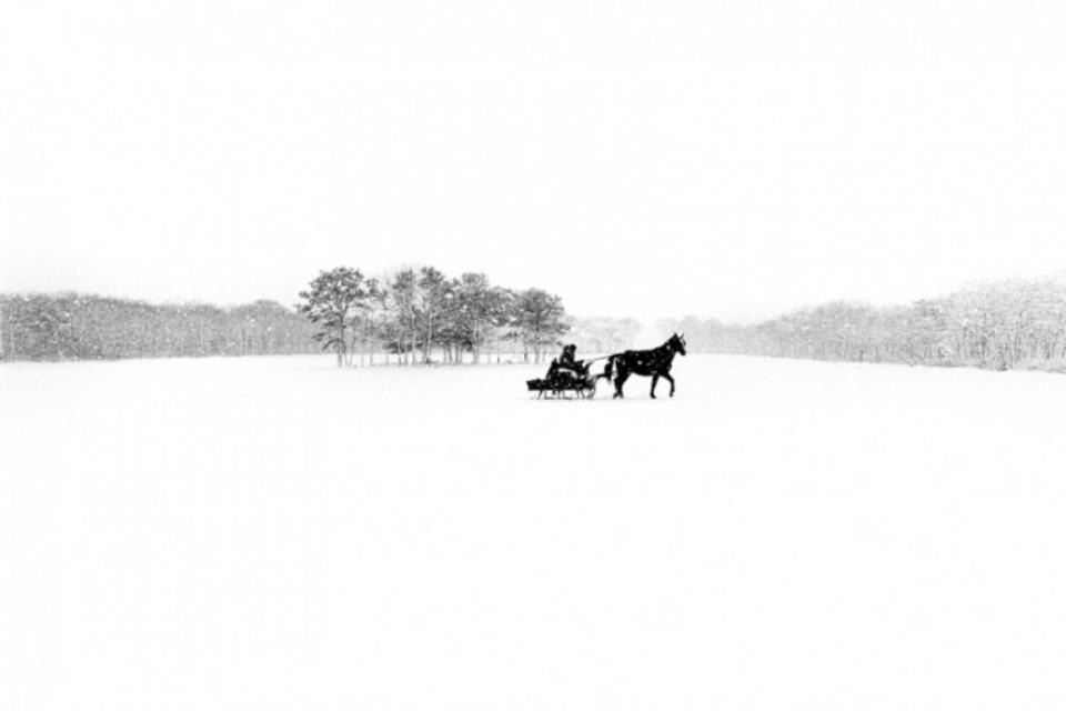Alison Shaw: Great Pond Farm