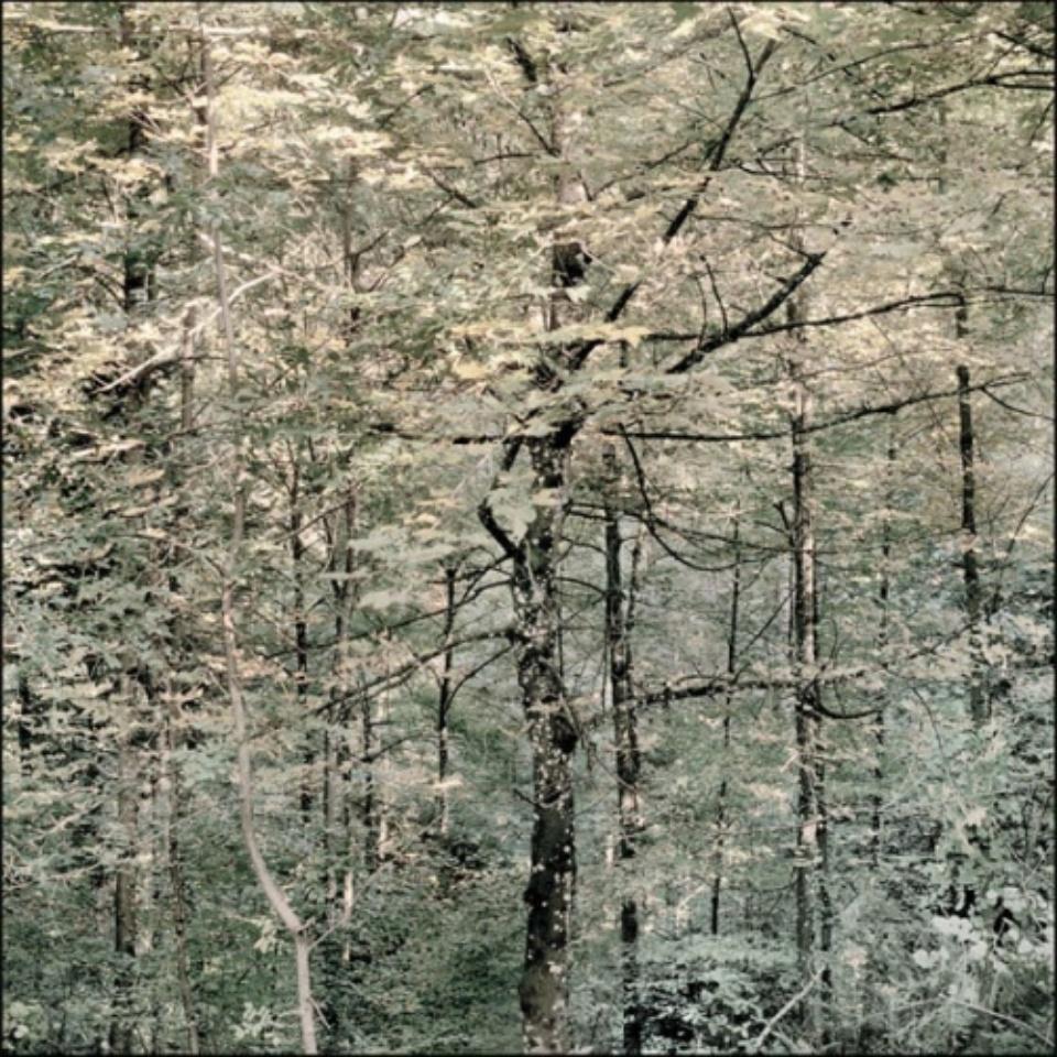Mat Hennek: D Kanzem I Kanzem, 2009 Labeled on verso Archival pigment print on alu dibond 110 x 110 cm Ed. 1/3