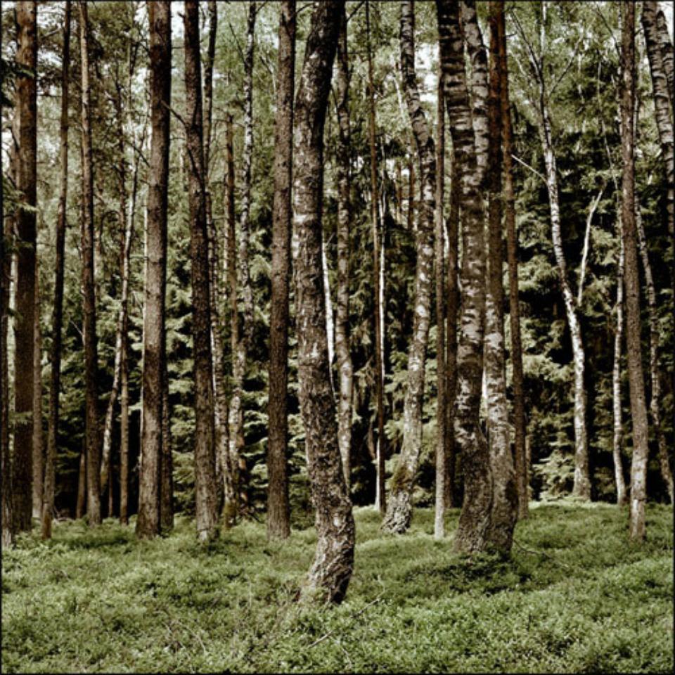 Mat Hennek: D Weissenhorn I Weissenhorn, 2008 Labeled on verso Archival pigment print on alu dibond 60 x 60 cm Ed. 6