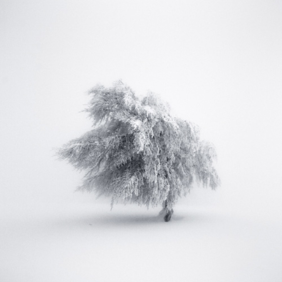Michael Schlegel Frozen Life VIII 2009 Archival pigment print Signed, titled, dated and numbered on verso 30 x 30 cm, 50 x 50 cm, 75 x 75 cm