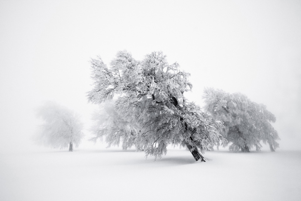 Michael Schlegel Frozen Life VII 2009 Signed, titled, dated and numbered on verso Archival pigment print 30 x 45 cm, 50 x 75 cm