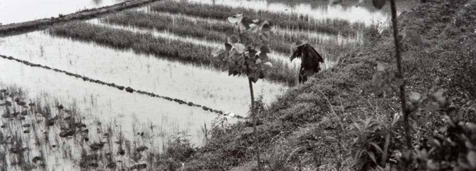 Sylvia Plachy Rice-Paddy in Rain Dunyang, China, 2004 Gelatin Silver Print