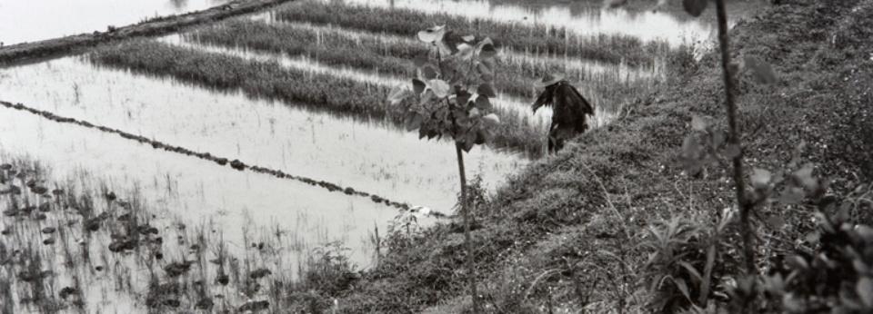 Sylvia Plachy Rice-Paddy in Rain Dunyang, China, 2004 Gelatin Silver Print