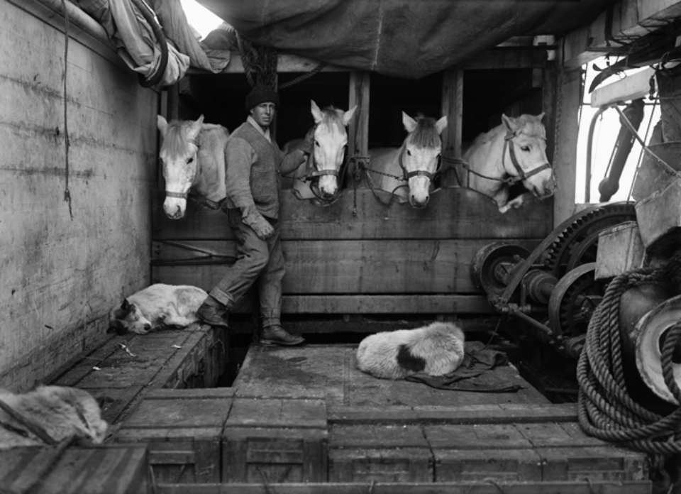 Herbert G. Ponting: Capt. Oates and some of the Ponies Embossed on recto, numbered on verso Modern Platinum palladium print Two different sizes available Ed.of 30