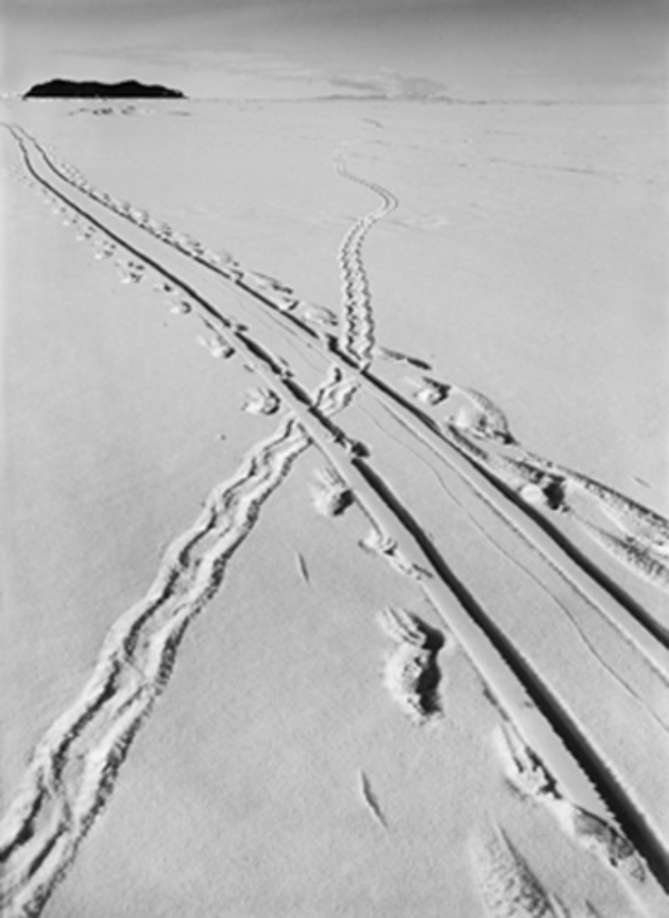 Herbert G. Ponting: Adelie Penguins track and sledge track crossing 08.12.1911 Embossed on recto, numbered on verso Modern Platinum palladium print Two different sizes available Ed. of 20