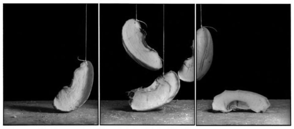 Joachim Froese: Rhopography #27 2002 3 gelatin silver prints 36 x 86 cm Ed. 12