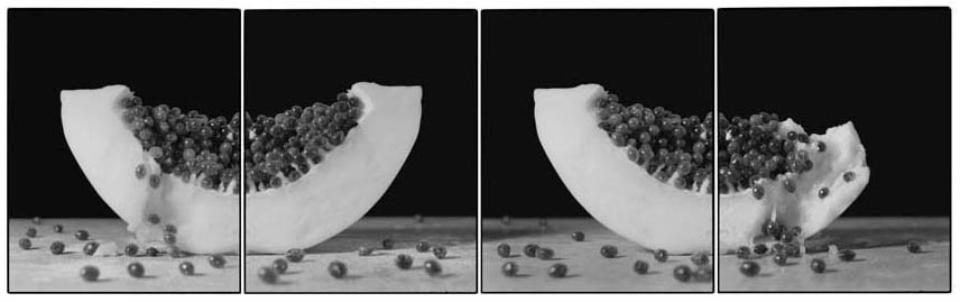 Joachim Froese: Rhopography #42 2003 3 gelatin silver prints 46 x 116 cm Ed. 12