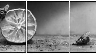 Joachim Froese: Rhopography #15 2000 3 gelatin silver prints 46 x 116 cm Ed. 12