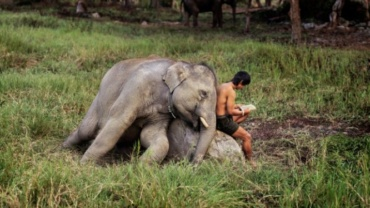 Steve McCurry: Mahout reads with his Elephant Chiang Mai, Thailand, 2010