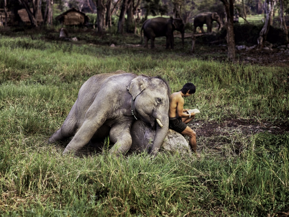 Steve McCurry. Mahout Reads with his Elephant Chiang Mai, Thailand, 2010