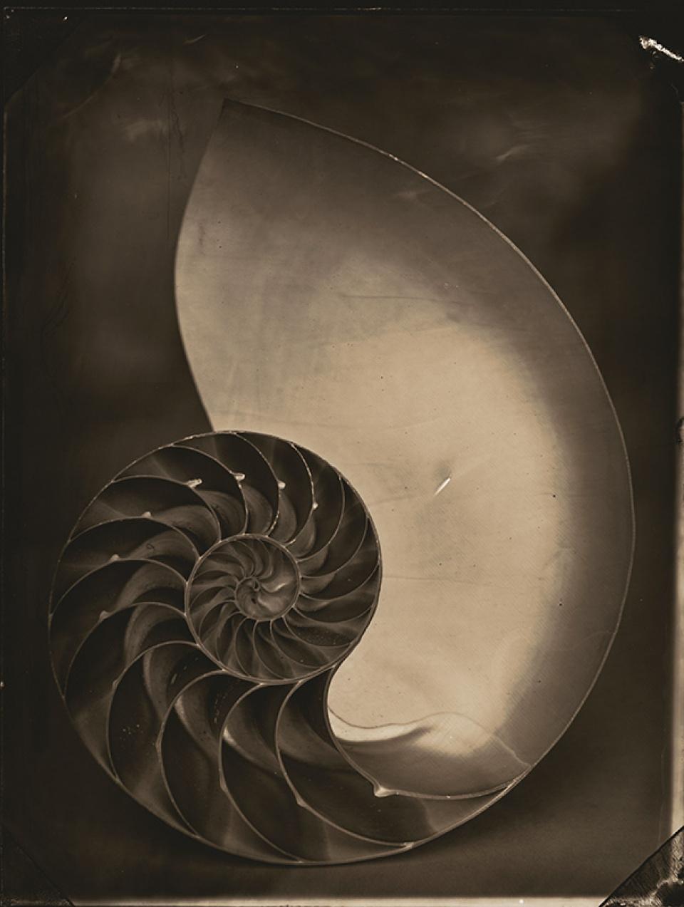 Tom Baril. Nautilus, 2001. Selenium toned gelatin silver print
