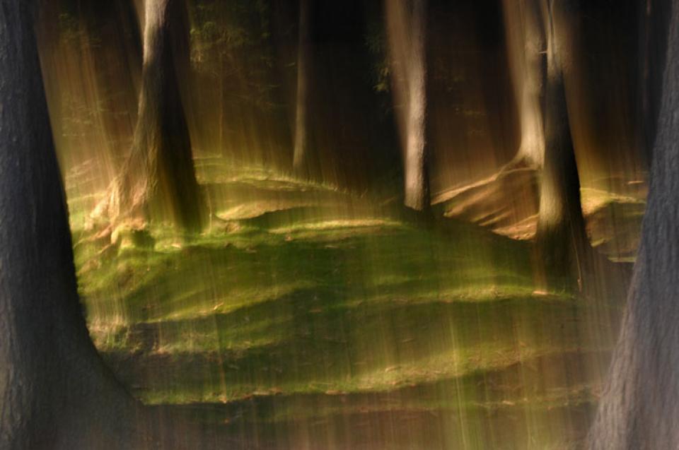 Sabine Wenzel. Der deutsche Wald