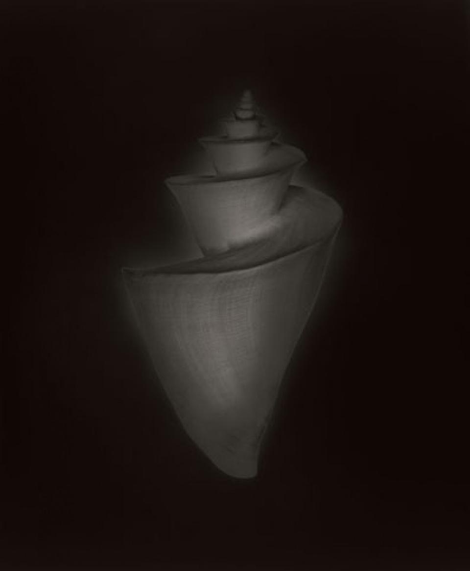 Christian von Alvensleben. Shells. 2010