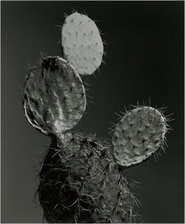 Christian von Alvensleben. Cactus. 2011