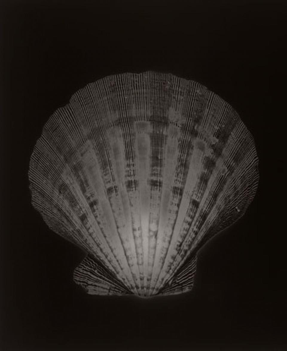 Christian von Alvensleben. Shells